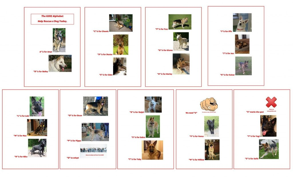 ABC OF DOGS REHOMED SUMMARY