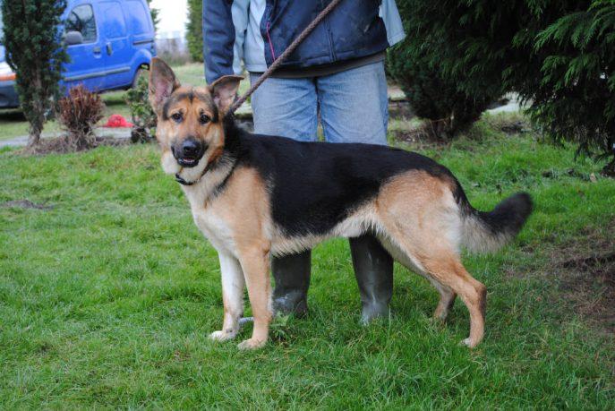 Retford dogs 006-w1000-h800