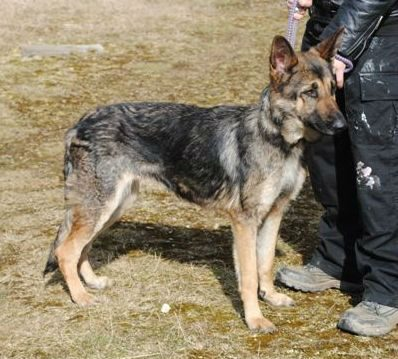 Hickingwood kennel dogs 017-w1000-h800