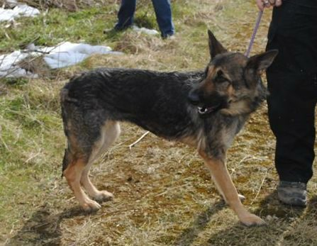 Hickingwood kennel dogs 024-w1000-h800
