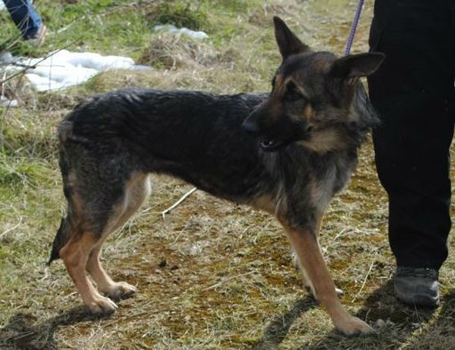 Hickingwood kennel dogs 025-w1000-h800