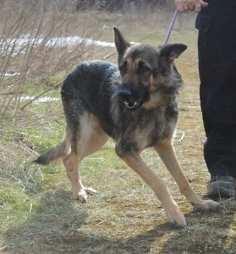 Hickingwood kennel dogs 037-w1000-h800