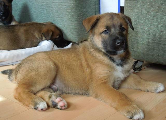 Pup 4 male-w1000-h800