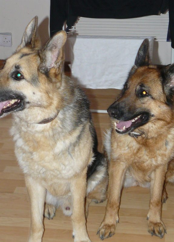 Spike & Callie-w1000-h800