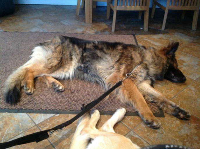 Gemma lying on the rug.-w1000-h800