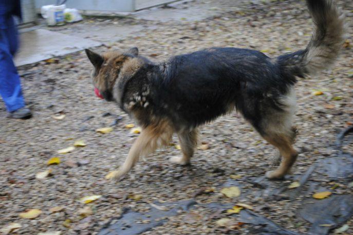 Spalding kennel dogs Nov 13 047-w1000-h800