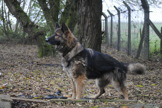 Spalding kennel dogs Nov 13 049-w1000-h800