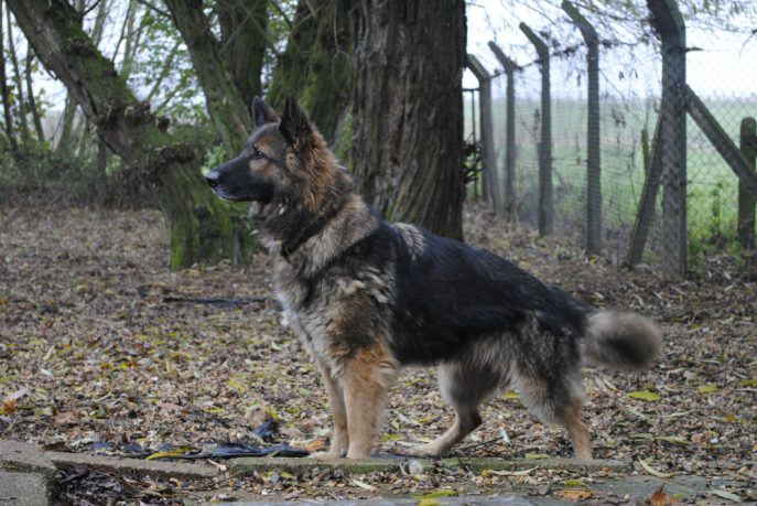 Spalding kennel dogs Nov 13 050-w1000-h800