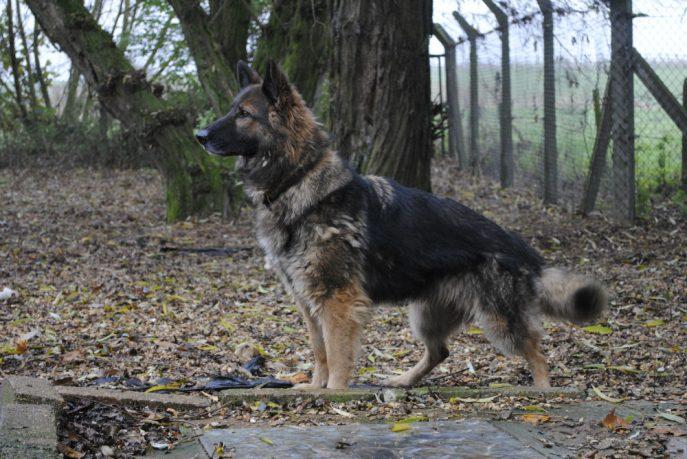 Spalding kennel dogs Nov 13 051-w1000-h800