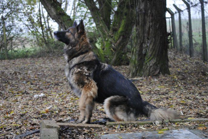 Spalding kennel dogs Nov 13 052-w1000-h800