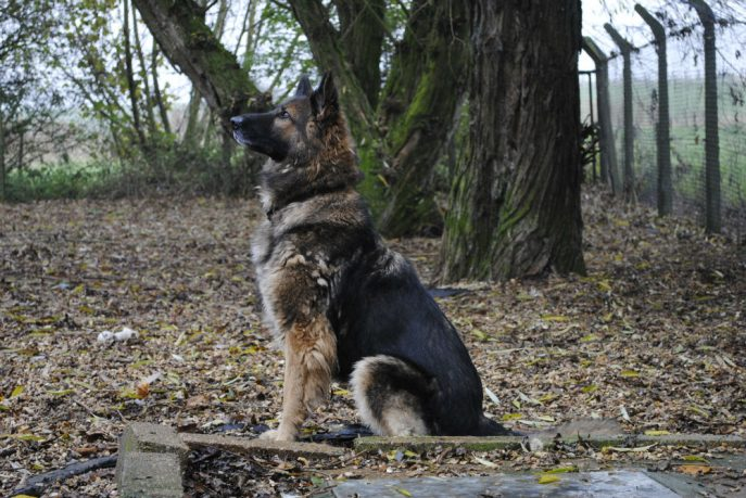 Spalding kennel dogs Nov 13 053-w1000-h800