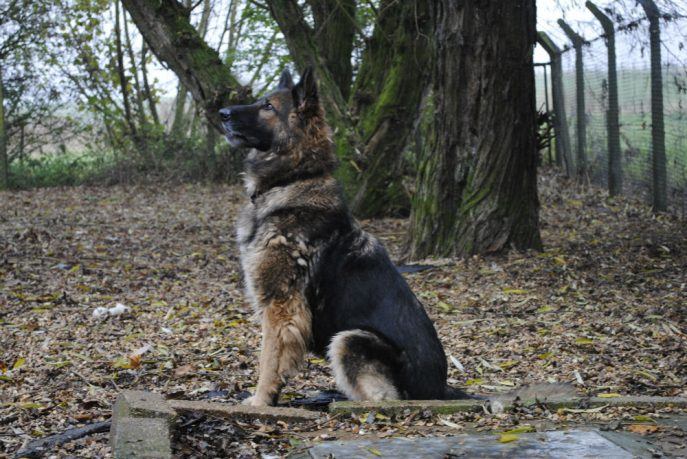 Spalding kennel dogs Nov 13 054-w1000-h800