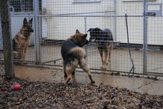 Spalding kennel dogs Nov 13 055-w1000-h800