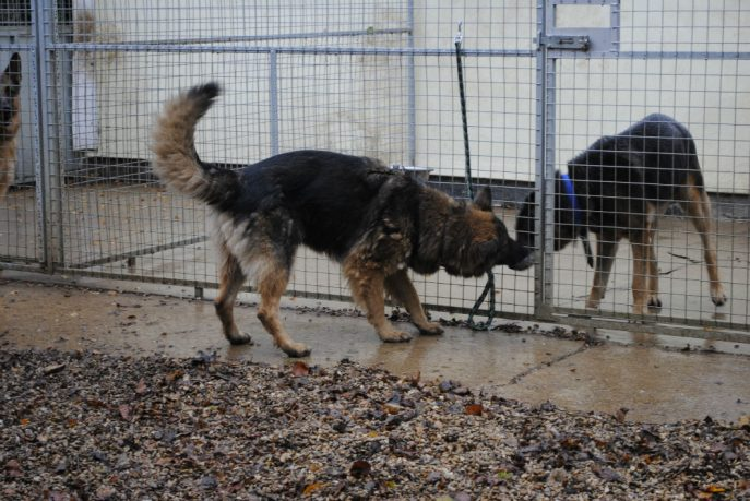 Spalding kennel dogs Nov 13 056-w1000-h800