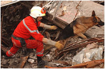 Urban Search and Rescue Task Force dog works to uncover survivors at the site of the collapsed World Trade Center after the September 11, 2001 attacks.