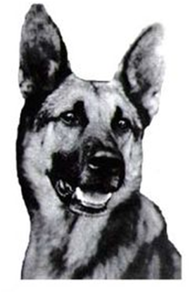 Strongheart, one of the earliest canine stars.