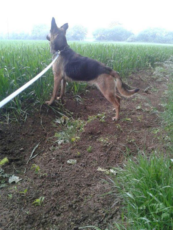 Ella looking in field-w1000-h800