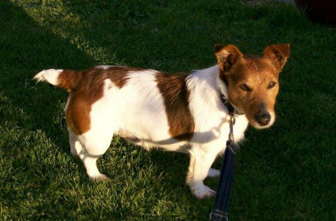 JACK . (4 yrs approx) in Cornwall-w1000-h800