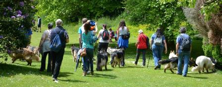 Sunday GSD Walk Club (Devon)