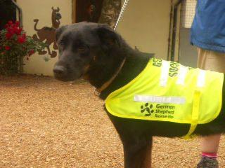 GSRE Kennel Dogs 0262 Dakota-w1000-h800