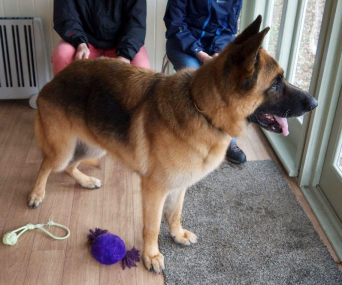 Scooby 5-w800-h1000