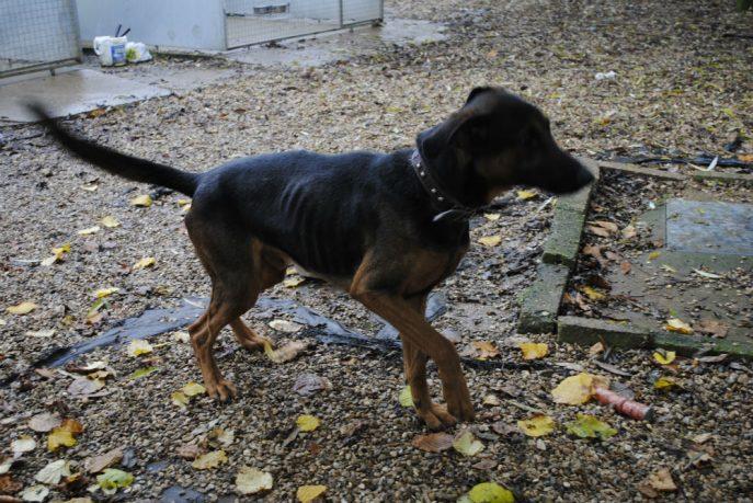 Spalding kennel dogs Nov 13 035-w1000-h800