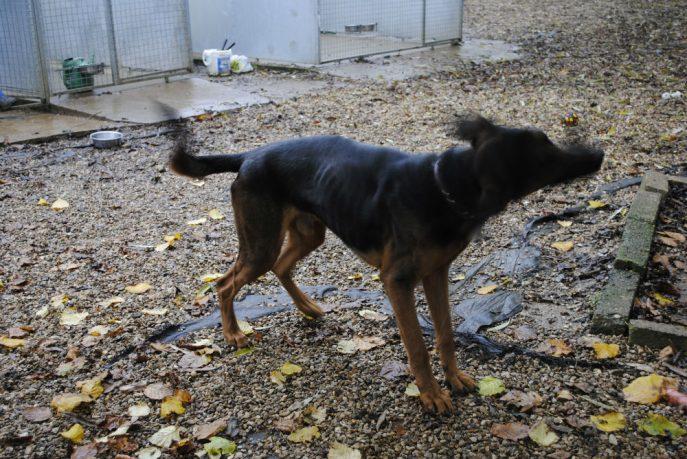 Spalding kennel dogs Nov 13 036-w1000-h800