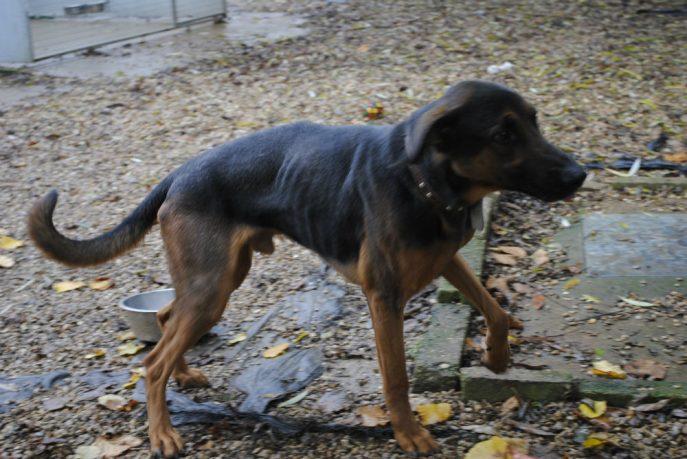 Spalding kennel dogs Nov 13 037-w1000-h800