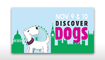 Discover Dogs