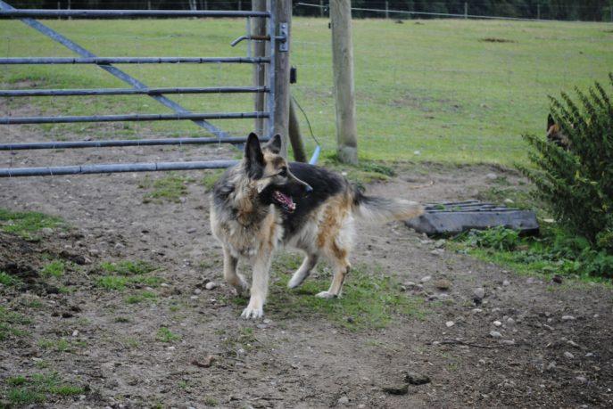 Tara and the footy pics 018-w1000-h800
