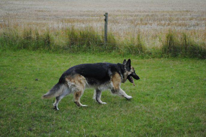 Tara and the footy pics 041-w1000-h800