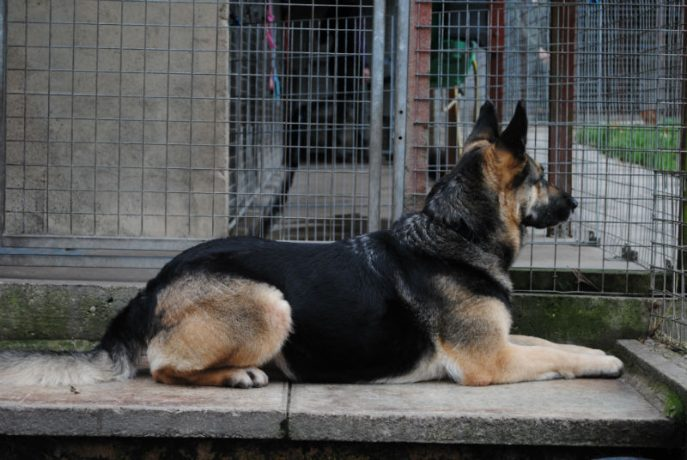 Kennel Stay 028-w800-h1000