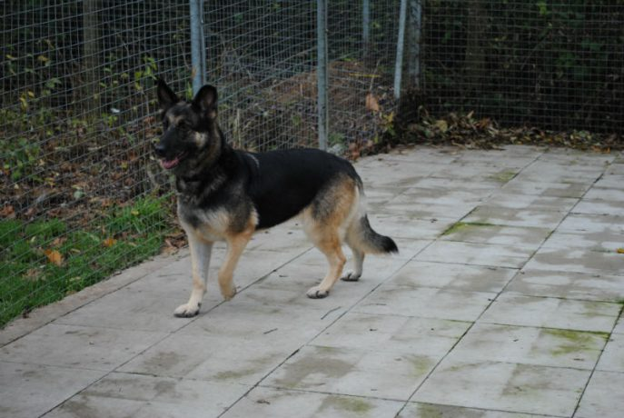 Kennel Stay 030-w800-h1000
