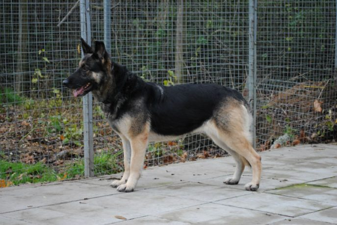 Kennel Stay 035-w800-h1000