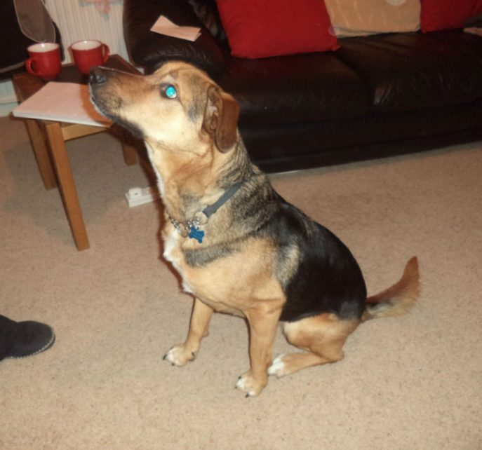 stray dog 003-w1000-h800
