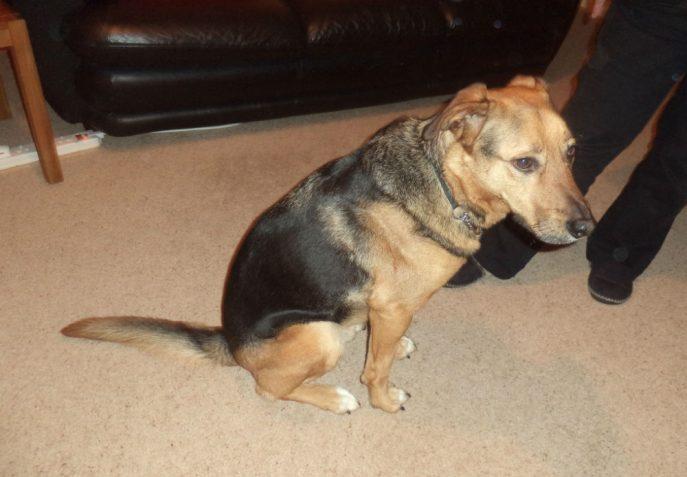stray dog 007-w1000-h800