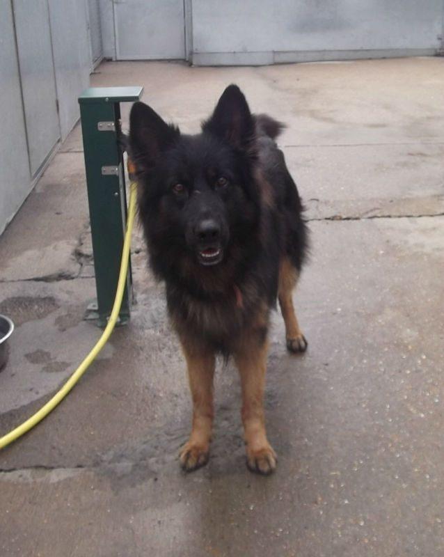 Benji (2)