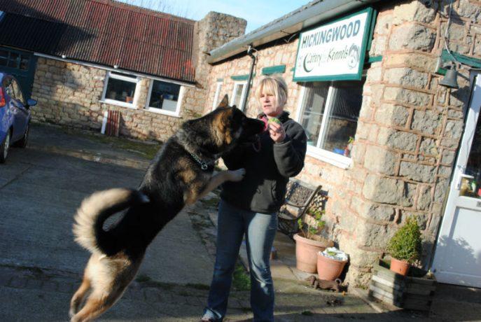 Bruce, hamper and new dogs 046-w800-h1000
