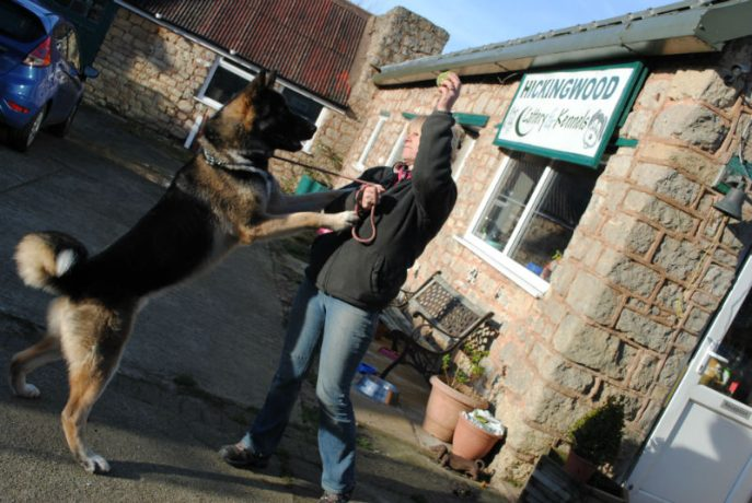 Bruce, hamper and new dogs 047-w800-h1000