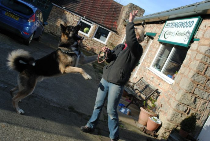 Bruce, hamper and new dogs 048-w800-h1000