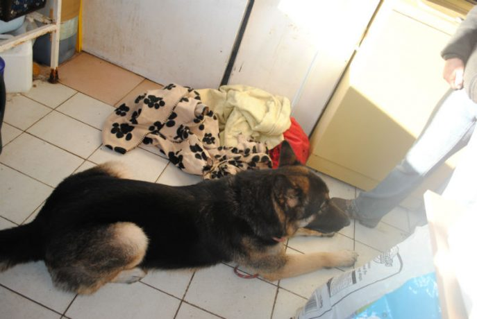 Bruce, hamper and new dogs 053-w800-h1000