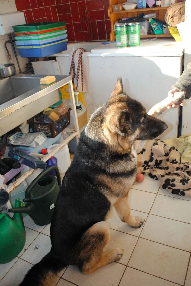 Bruce, hamper and new dogs 058-w800-h1000