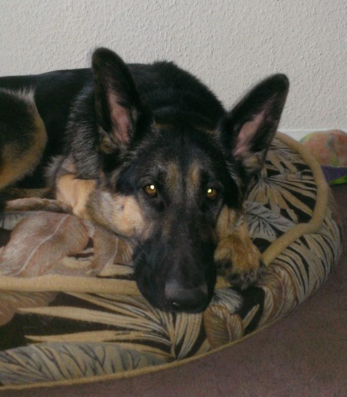 Dido (3)