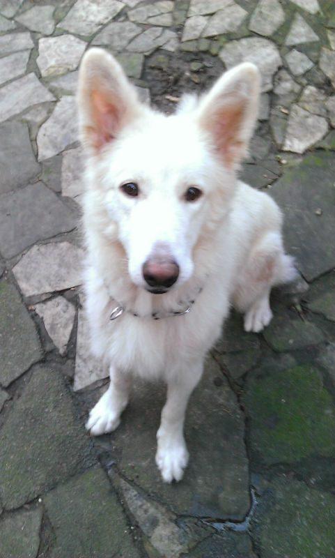 Koshi (4)