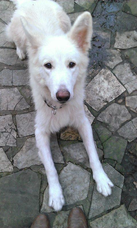 Koshi (5)