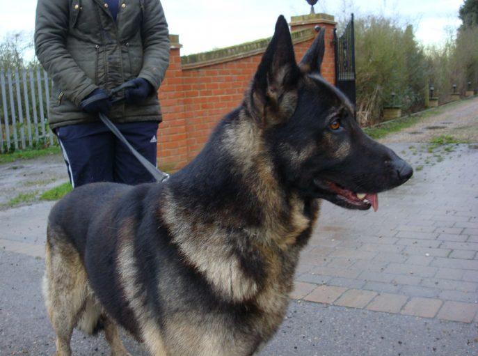 Rex (3)