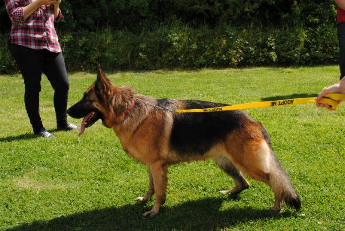 Castlefield Kennel dogs 030-w800-h1000