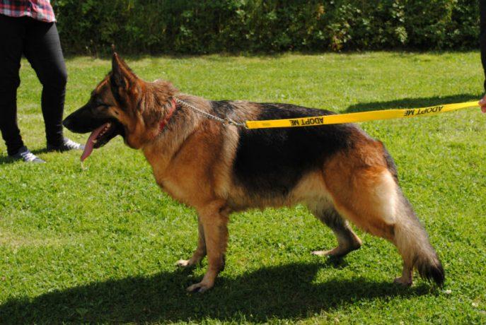 Castlefield Kennel dogs 031-w800-h1000