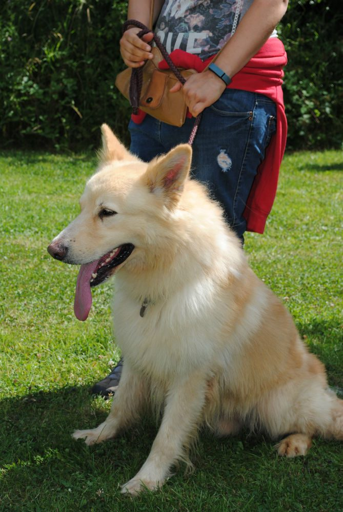 Castlefield Kennel dogs 043-w800-h1000