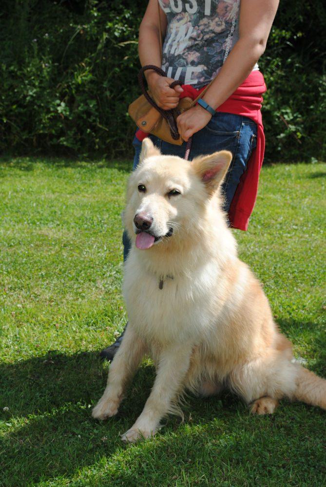 Castlefield Kennel dogs 045-w800-h1000